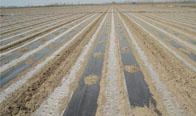 农膜,地膜,大棚膜,缠绕膜,农业薄膜低价批发
