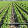 湖北荆门农场灌溉喷灌系统