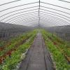 泰州农场灌溉自动控制系统
