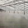 广东河源温室大棚人造雾浇灌节水
