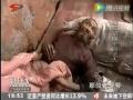 全球卫视:吃一顿肉 就死了感激你 睡在猪圈的老人 (4606播放)