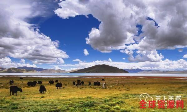 """西藏有一种动物叫""""路霸"""",司机看到必须要停车让道"""