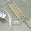 哈佛BTX电融合电极曲流融合室电极现货全国联保