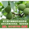 大量提供2012年核桃苗枣树苗薄皮核桃