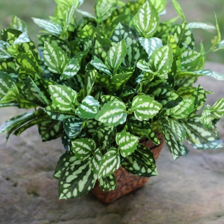 仿真植物厂家小7头白绿叶 植物墙配材 园林装饰 布景花材