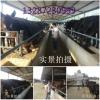 陕西咸阳驴驹最低市场价格走势,山东济宁养驴场