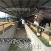 陕西咸阳种驴最新价格行情,山东菏泽养驴基地