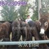 陕西咸阳肉驴苗多少钱一头?山东乌头驴养殖场