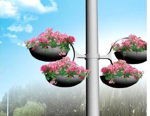 垂吊牵牛  花柱  花墙专用花