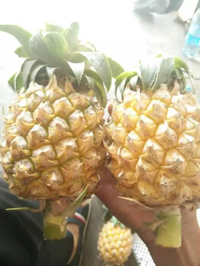 【荐】泰国水果什么好吃微信号:tgjksg