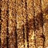 六安出售意蜂蜂群 大棚授粉蜜蜂出售
