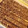 出售意蜂蜂群|五龙山蜂场|大棚西瓜授粉蜜蜂