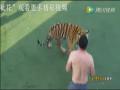 全球TV:实拍男子和老虎搏斗 场面惊心动魄1 (4739播放)