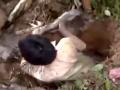 全球卫视:男子在树下挖了个洞 没想到居然是鱼的老窝 (4949播放)