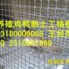 河北省养殖土工格栅网塑料土工格栅塑料网厂家