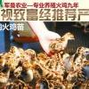 火鸡苗出售 指导养殖 长期回收火鸡