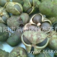 茶树种子、茶叶种子、绿茶种子、茶叶籽、信阳毛尖茶种子厂家供应