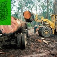 澳洲卡里木 桃花心木卡里木材一手货源批发商