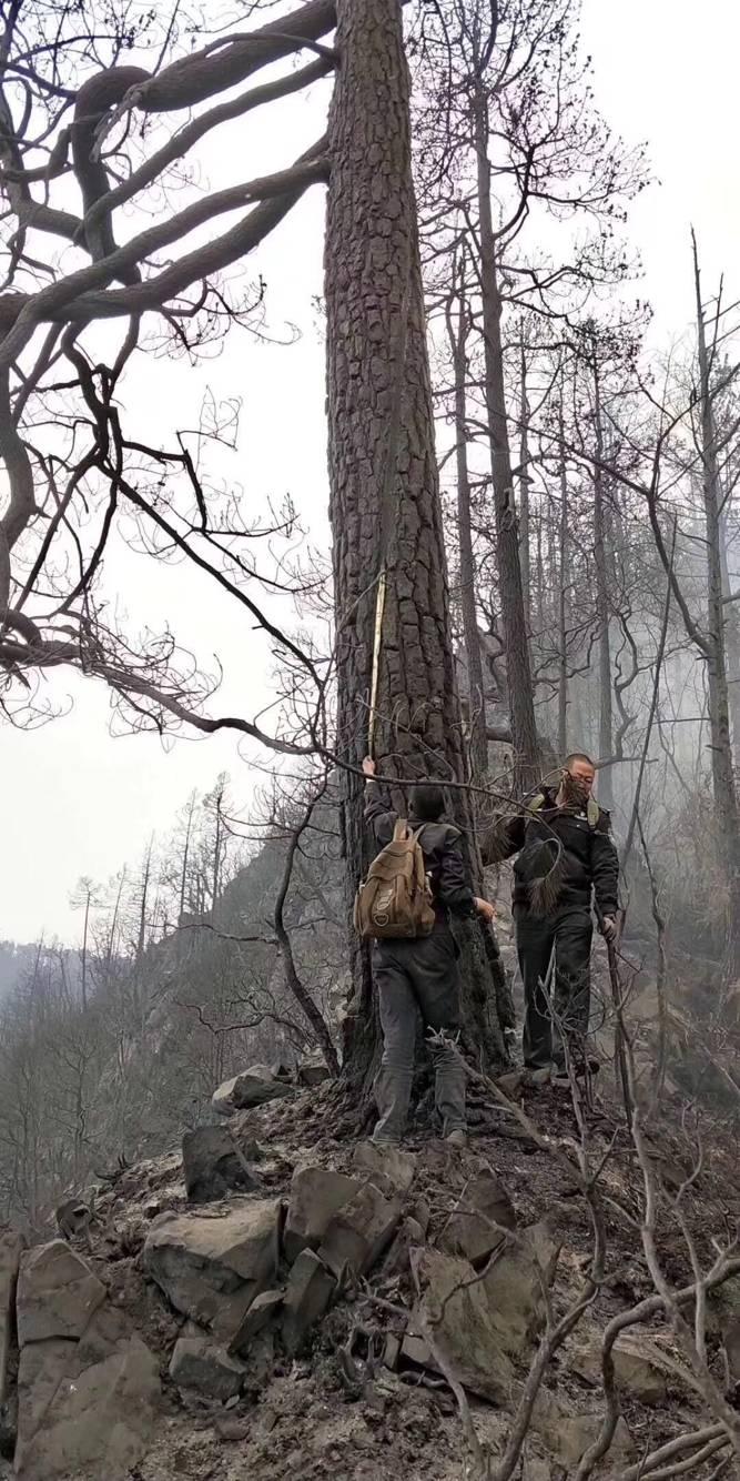 凉山大火确认为雷击火 着火点为1棵80年树龄云南松