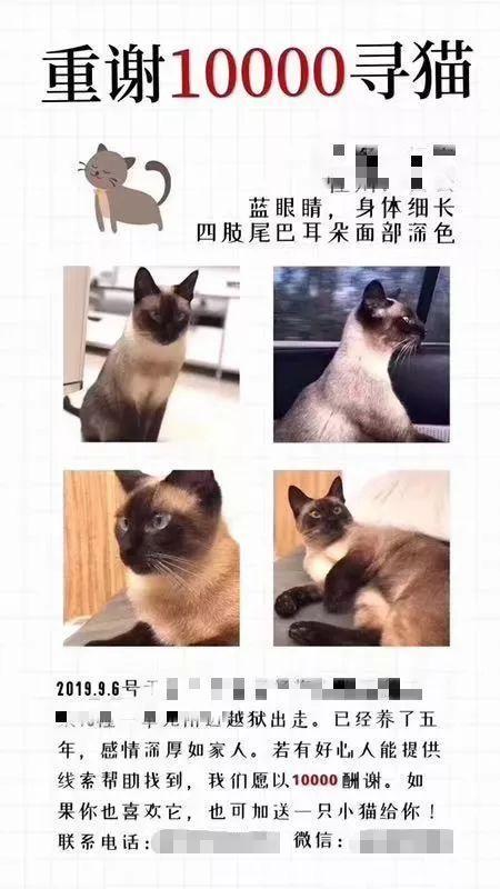杭州万元寻猫引热议 媒体:丢了更重要的东西