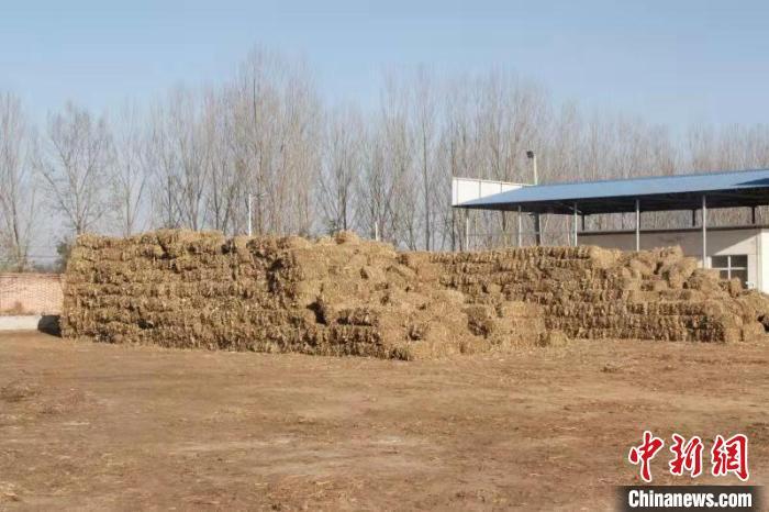 禾能电厂收购打捆秸秆的价格为一吨280元,一年需求约20万吨秸秆,能给当地民众增收5000余万元。 王维宁 摄
