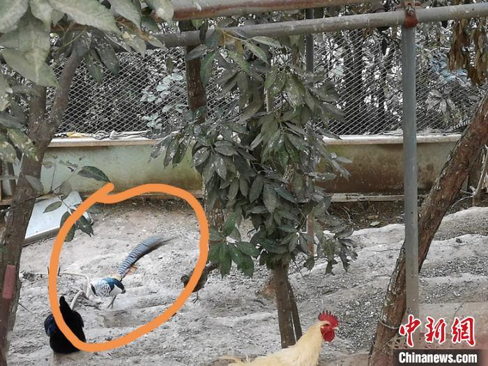 图为山庄内收购驯养的珍贵、濒危野生动物。 云南警方供图 摄