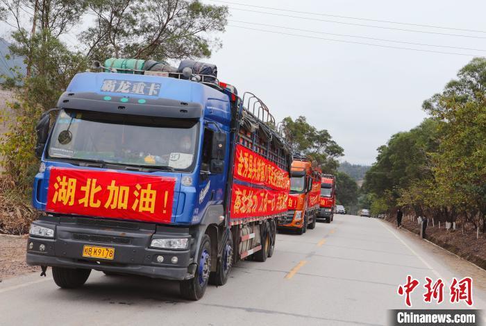 60吨爱心沙糖桔从金秀县头排镇发往湖北。 陈海清 摄
