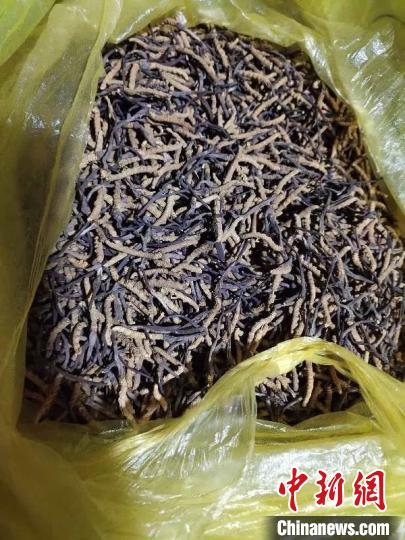 青海藏区牧民自发给武汉捐赠近20万元冬虫夏草
