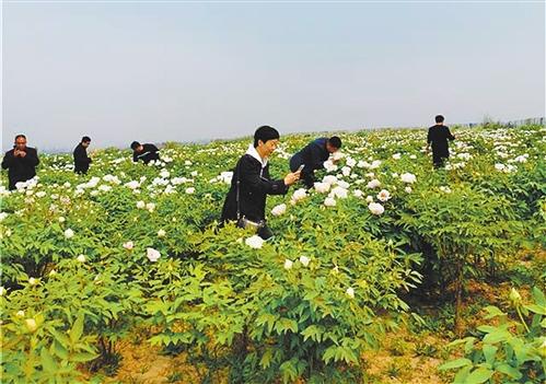游客在河北邯郸峰峰矿区西固义乡北神岗村的牡丹谷里欣赏盛开的牡丹花。经济日报记者 宋美倩摄