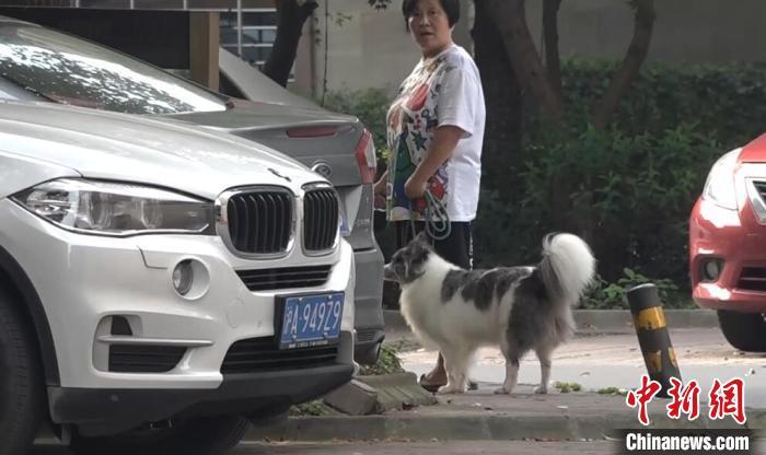 上海开展养犬行为专项整治当场可处50元以下罚款