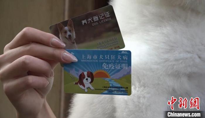 上海市养犬办理的两张证件 张践 摄